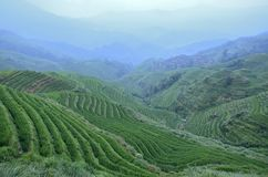 Longji terraced fields of rice Stock Images