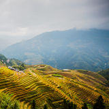 Longji terraced landscape in Autumn. Longji terraces after the autumn harvest with ancient village at Longsheng, Guilin, Guangxi province, China stock photography