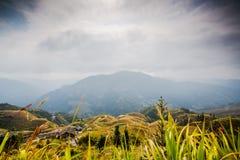 Longji terraced landscape in Autumn Stock Photo