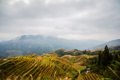 Longji terraced landscape in Autumn Royalty Free Stock Photo