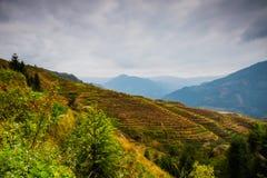Longji terraced landscape in Autumn Stock Photos