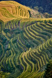Longji terraced Longsheng de Wengjia dos campos do arroz foto de stock royalty free
