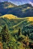 Longji terraced Longsheng Hunan China de Wengjia dos campos do arroz Imagens de Stock