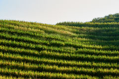 Longji terraced Longsheng Hunan China de Wengjia dos campos do arroz Fotos de Stock