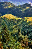 Longji terraced Longsheng Hunan China de Wengjia dos campos do arroz Foto de Stock Royalty Free