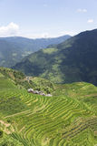 Longji Terraced Rice Fields Royalty Free Stock Image