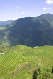 Longji Terraced Rice Fields Stock Photography