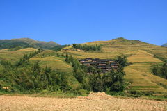Longji Terraces. Image of Longji Terraces Stock Images