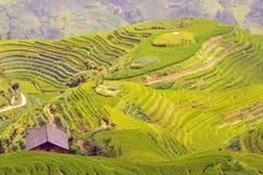 Longji Terraces Rice Fields Near Guilin, Guangxi, China Stock Images