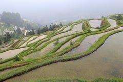 Longji terrass, guangxi, porslin Arkivbilder