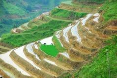 Longji terrassfält i Guilin Royaltyfri Foto