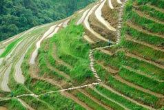 Longji terrassfält i Guilin Royaltyfria Bilder