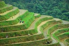 Longji terrassfält i Guilin Arkivbild