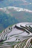 Longji terrassfält i Guilin Royaltyfri Fotografi