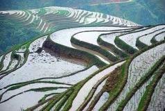 Longji terrassfält i Guilin Arkivfoto