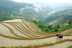 Longji terrassfält i Guilin Royaltyfria Foton
