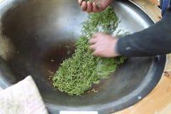 Longjing teaproduktion Royaltyfri Foto