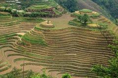Longjiterras, guangxi, China Stock Fotografie