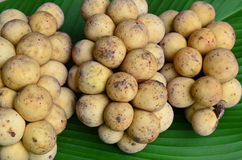 Longkong, frutas tailandesas Imagem de Stock Royalty Free