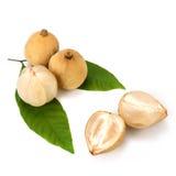 Longkong, Langsat lub Lanzones owoc, jest endemiczna Azja Południowo-Wschodnia Zdjęcia Royalty Free