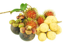 Longkong rambutan and mangosteen sweet fruit isolated Stock Images