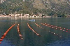 Longline culture mussel farm. Montenegro, Adriatic Sea, Bay of Kotor royalty free stock photos