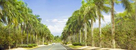 Longo caminho alinhado com palmeiras e o céu azul Imagens de Stock