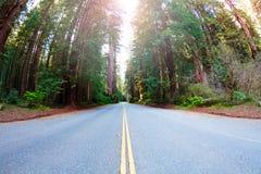 Longo caminho através do parque nacional da sequoia vermelha, EUA fotografia de stock