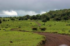 Longo caminho na floresta Imagem de Stock Royalty Free