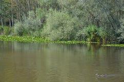 Longoz view karasu. Every shade of green Royalty Free Stock Photography