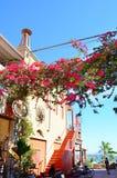 Longs escaliers en pierre avec beaucoup d'étapes et de fleurs de bouganvillée Photographie stock libre de droits