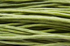 Longs haricots verts Images libres de droits
