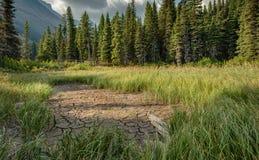 Longs herbe, boue, et pont en parc national de glacier Photos stock