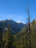 Longs Peak and Tree Royalty Free Stock Images