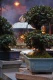 Longshan temple bonsai detail. Taipei, Taiwan Royalty Free Stock Photos