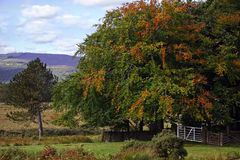 Longshaw Valley Stock Photography