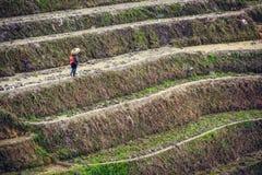 Longsheng by Arkivfoto