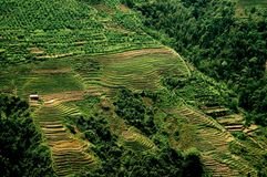 Longsheng, China: Terraced Rice Paddies. Terraced rice paddies form neatly sculpted patterns climbing up the sides of a mountain hillside in China's Guang Xi Stock Photos