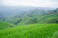 Longsheng County of Guangxi province Chinese Longji terrace Scenic Area Stock Photography