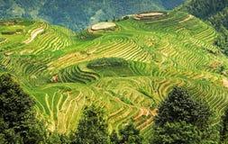 Longsheng or Longji Rice Terrace Dragon`s Backbone Guilin, Guangxi, China. Longsheng or Longji Rice Terrace Dragon`s Backbone Guilin, Guangxi, China royalty free stock photography