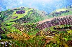 Longsheng Reis-Terrassen Lizenzfreies Stockfoto