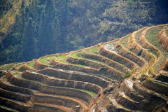 Longsheng Reis-Terrassen, China Stockfotos