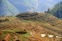 Longsheng Reis-Terrassen, China Lizenzfreies Stockbild