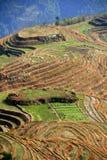 Longsheng Reis-Terrassen, China Lizenzfreie Stockbilder
