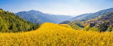 Longsheng-Reis-Terrassenpanorama stockbilder