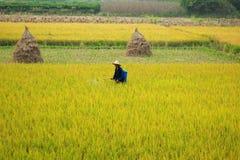 Longsheng rice paddy, China Royalty Free Stock Photo