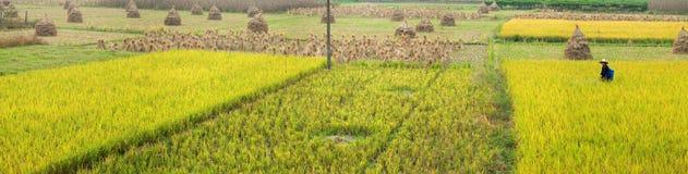 Longsheng rice paddy, China Stock Images