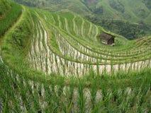 Longsheng Rice Terrace. Dragon's Backbone Rice Terraces in Longsheng, Guangxi Province, China Stock Images