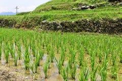 Longsheng Rice Terrace,Guilin Royalty Free Stock Photography