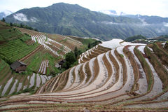 Longsheng Rice Terraces Stock Photos